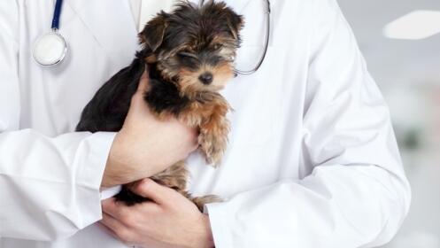 Tratamiento desparasitación externa e interna para perros
