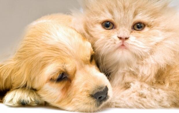 Chequeo veterinario cachorros.A Coruña