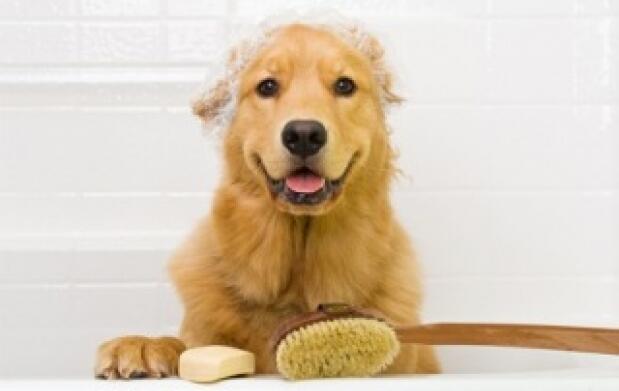 2 sesiones completas de peluquería canina