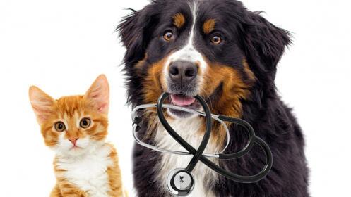 Revisión completa para cachorros y adultos