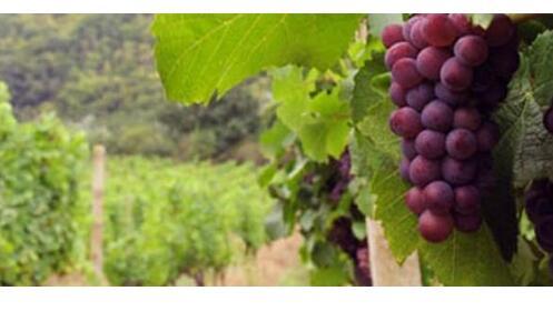 Visita guiada + Cata de 3 vinos con aperitivo + Botella Monte Real Crianza