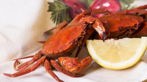 Excelente menú degustación: Nécoras, langostinos, navajas, bacalao, solomillo en salsa de setas, bebida, postre, botella de cava