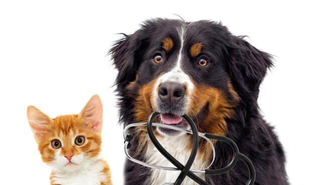 Revisión completa para cachorros y adultos, incluye vacuna