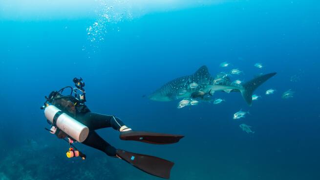 ¡Atrévete a bucear con tiburones en O Grove! Una completa actividad de 3 horas